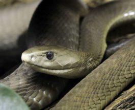 змея,садовый шланг,