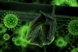 коронавирус, летучие мыши, новый вирус,