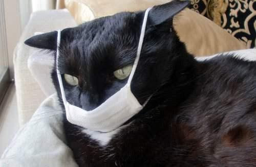 кошка коронавирус