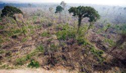 Вырубка джунглей Амазонки находится на самом высоком уровне за 12 лет