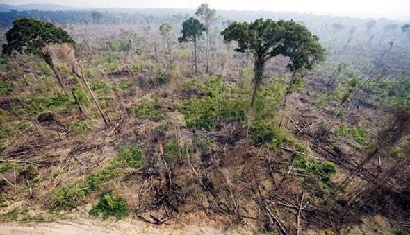 Амазонка, лес, вырубка лесов,