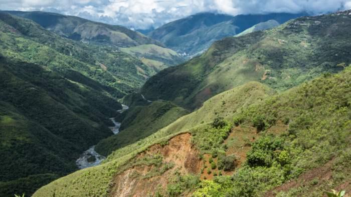Боливия, новые виды,