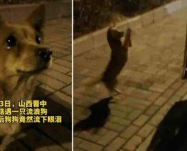 Китай, собака, плачет,