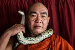 Буддийский монах предлагает убежище змеям, находящимся под угрозой исчезновения