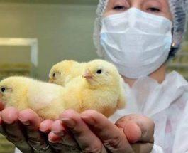 Словения, птичий грипп,