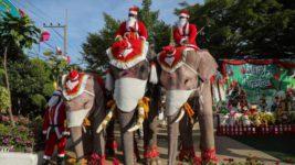 Слоны, Санта Клаус, костюмы, Таиланд,