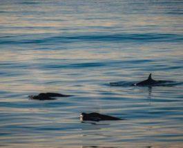 Тихий океан, киты,