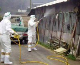 Япония, птичий грипп,