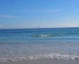 дельфины, Бразилия, пляж,