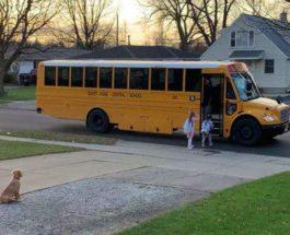 золотистый ретривер, школьный автобус,