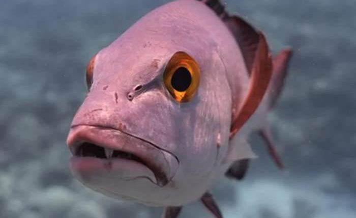 рыба, старая рыба,