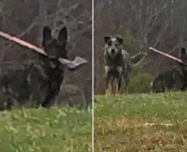 собака, топор, собака с топором,