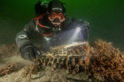 Секретную кодировочную машину Enigma нашли в Балтийском море