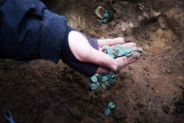Венгрия, ферма, монеты,