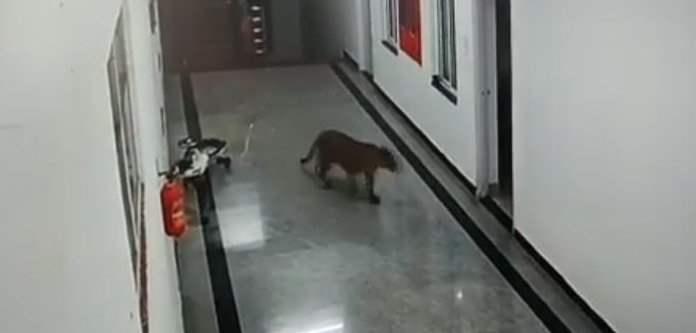 Индия, леопард, кампус,
