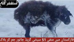 Ледниковый период в Казахстане — животные замерзают на ходу (ВИДЕО)