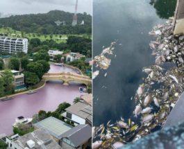 Сингапур, вода, загрязнение, экология,
