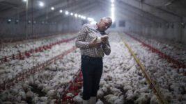 Франция, птичий грипп,
