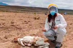 Чупакабра высосала кровь у 50 голов скота и бесследно исчезла