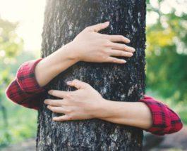 деревья, лес, генная инженерия,