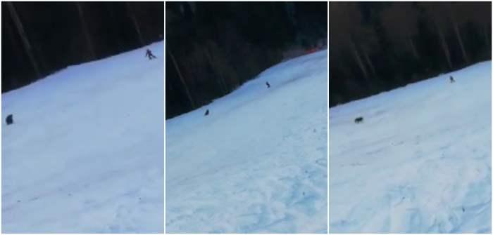 медведь, Румыния, курорт, лыжник,