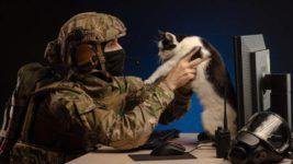 оружие, животные, Австралия, приют,
