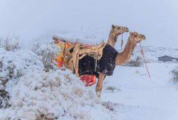 Снег и лед покрыли пески Сахары (ФОТО и ВИДЕО)