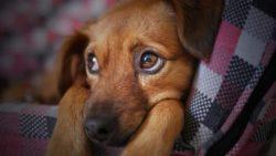 Искусственный интеллект научился дрессировать собак