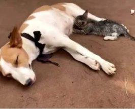 собака, котенок, Нигерия,