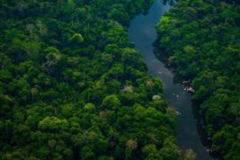 Бразилия, Амазонка, парк,