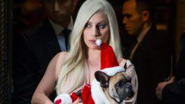 Леди Гага, собаки, похищение,
