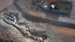 Удивительное окаменевшее дерево возрастом до 20 миллионов лет найдено нетронутым на Лесбосе