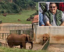 Слон, Испания, смотритель,