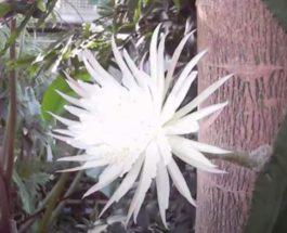 кактус, цветение, Кембриджский университет,