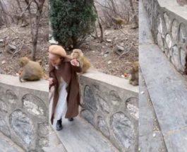 парик, обезьяна, девушка,