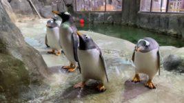 пингвины, зоопарк, мыльные пузыри,