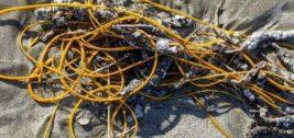 веревка, морской хлыст, коралл,