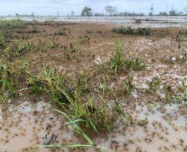 Австралия, пауки, наводнение,