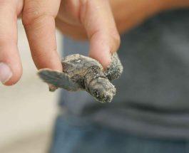 Галапагосские острова, аэропорт, черепахи,