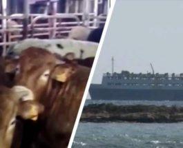 Греция, корм, судно, скот, Эльбейк, ElBeik,