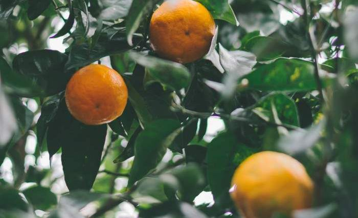 Испания, апельсины, электричество,