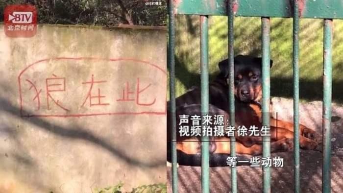 Китай, зоопарк, собака, волк,