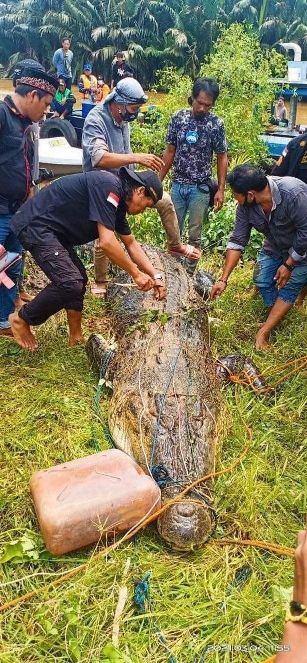 Крокодил, Индонезия, мальчик,