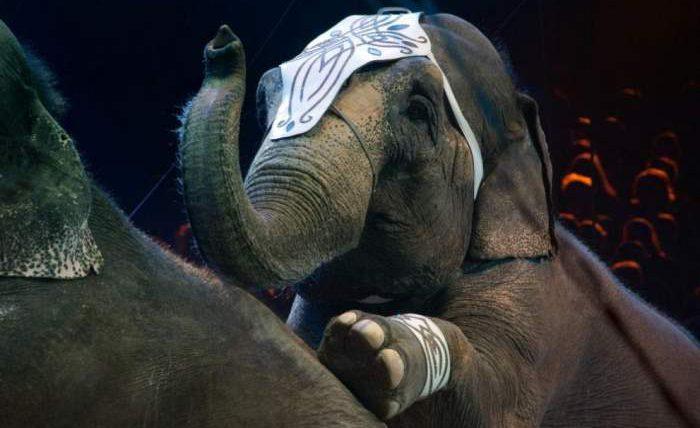 Слоны, Казань, драка, Цирк,