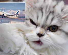 кошка, самолет, Судан,