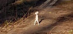 Женщина запечатлела на камеру «маленького гуманоида»
