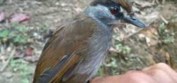 Вымершая птица обнаружена вновь спустя 170 лет