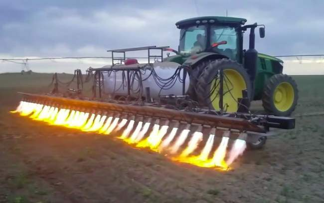 трактор, огнемет, прополка, сорняки,
