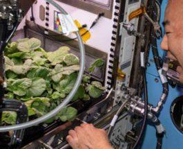NASA, МКС, растения,
