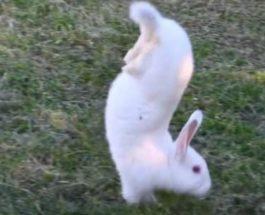 кролики, мутанты, лапы,